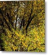 Willow Tree Metal Print
