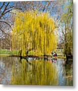 Willow Tree Water Reflection Metal Print by Matthias Hauser