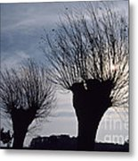 Willow Trees In Winter Metal Print