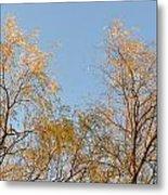 Willows And Sky Metal Print