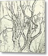 Willows By The Lake Metal Print