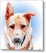 Willy A Former Shelter Sweetie Metal Print