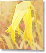 Wilted Yellow Lily In The Dew Metal Print