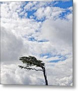 Wind-bent Flag Tree In Tierra Del Fuego Metal Print