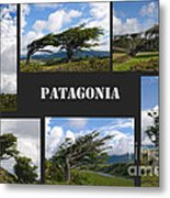 Wind-bent Flag Trees In Tierra Del Fuego Metal Print