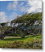 Wind-bent Tree In Tierra Del Fuego Patagonia  Metal Print