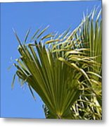 Wind In The Palm Metal Print