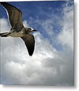 Wind Of The Day  Metal Print