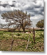 Wind Swept Kansas Tree Metal Print