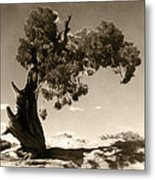 Wind Swept Tree Metal Print