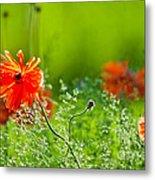 Windblown Poppies Metal Print