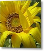 Windblown Sunflower One Metal Print