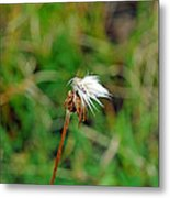 Winded White Metal Print