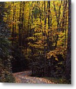 Winding Road - Fall Color Metal Print