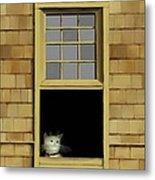 Window Cat    No. 2 Metal Print