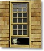 Window Cat    No.4 Metal Print