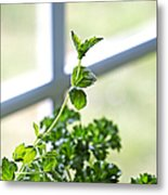 Window Herb Garden Metal Print