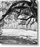 Window Oak - Bw Metal Print