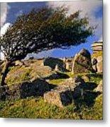 Windswept Hawthorn Tree Metal Print