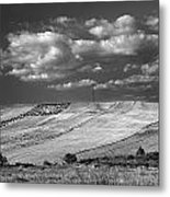 Windy At The Cereal Fields Metal Print