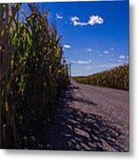 Windy Corn Metal Print