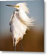 Windy Egret Metal Print by Tammy Smith