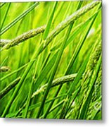 Windy Green Metal Print