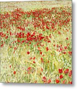 Windy Poppies At The Fields Metal Print