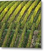 Wine Acreage In Germany Metal Print