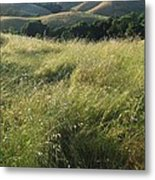 Wine Country Hills Metal Print