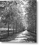 Wine Country Napa Black And White Metal Print