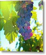 Wine Grapes  Metal Print