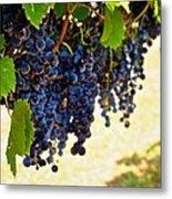 Wine Grapes Metal Print by Kristina Deane