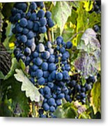 Wine Grapes Metal Print by Tetyana Kokhanets