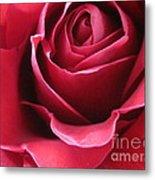 Wine Rose 6 Metal Print