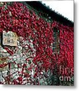 Winery Ivy Metal Print