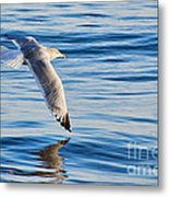 Wing Dipping Metal Print