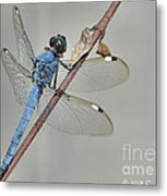 Wing Man Metal Print