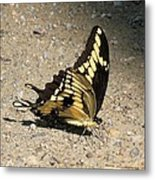 Winged Delight Metal Print