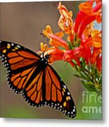 Winged Grace Metal Print