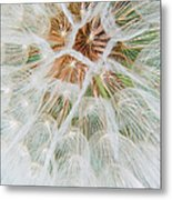 Winged Seeds Metal Print