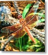 Winged Wonder Metal Print