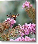 Wings In The Flowers Metal Print