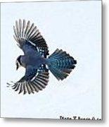Wings Of A Blue Jay Metal Print