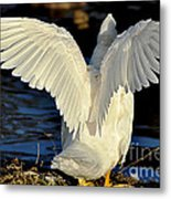 Wings Of A White Duck Metal Print