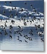 Wings Metal Print