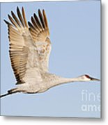 Wings Up Metal Print