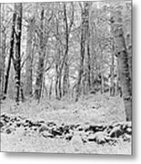 Winter And The Wall Metal Print