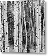 Winter Approaches Metal Print