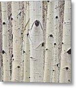 Winter Aspen Tree Forest Portrait Metal Print